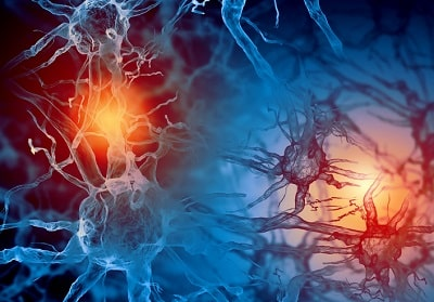 How Hormones Interact With the Nervous System to Affect Stress and Anxiety Levels