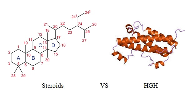 comparison of Steroid and Growth hormone molecules