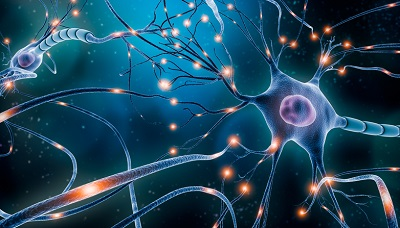 What Activities Do Hormones Perform in the Human Body