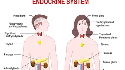 what are hormones and endocrine system